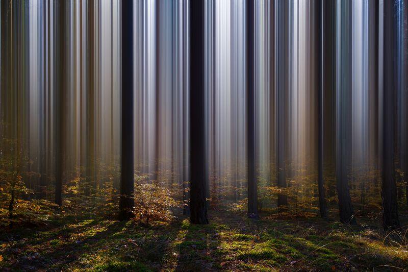 деревьяphoto preview