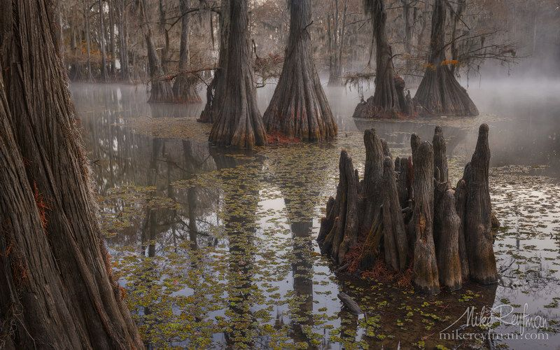 cypress, tree;, tupelo, tree;, bald, cypress;, bald, cypress, knees;, spanish, moss;, loisiana;, texas;, atchafalaya, river, basin;, big, cypress, bayou, area;, government, ditch;, southeastern, wetlands;, flooded;, fog;, moody;, uncertain;, landscape;, l В заповедных и дремучих страшных Муромских лесах...photo preview