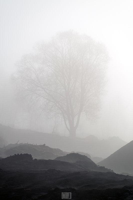 пейзаж, черно-белое, дерево, утро, туман, Плохие условияphoto preview