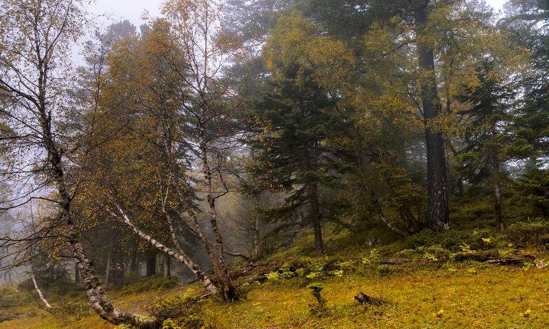 Про осень, туманы и смешанный лес...photo preview