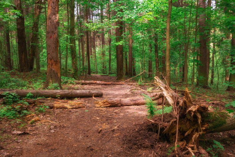 В летнем лесу (вариации)photo preview
