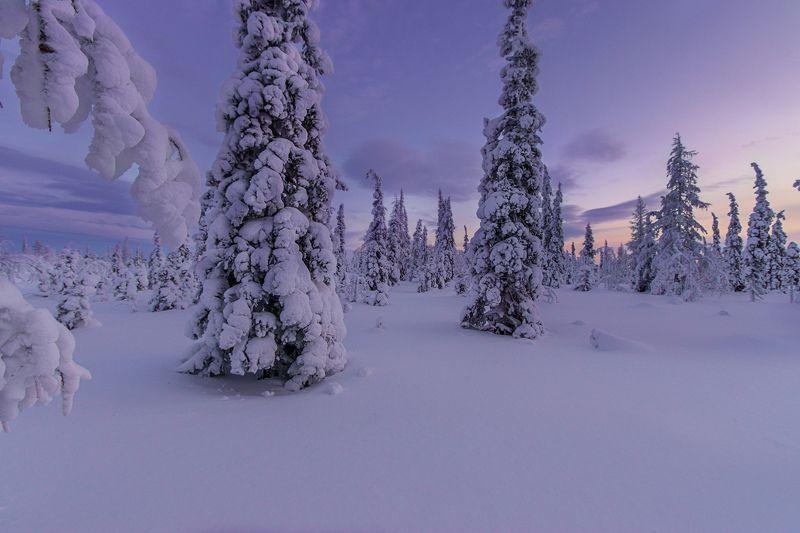 ямал , зима , природа, салехард , декабрь,  январь ,север \
