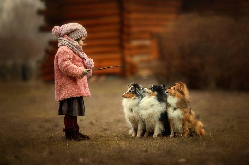 Дети, собаки, осень, девочка, шелти Маленькая дрессировщица.photo preview