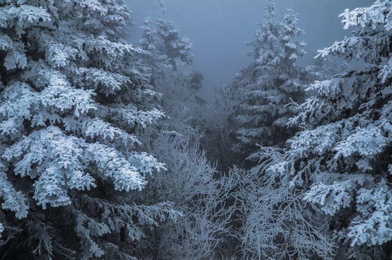 Туман Лес Зима Ёлки Снег Туманно сказочный лесphoto preview