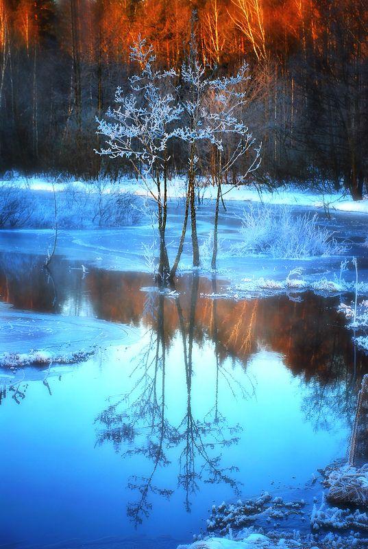 утро, мороз, болото Однажды морозным утромphoto preview