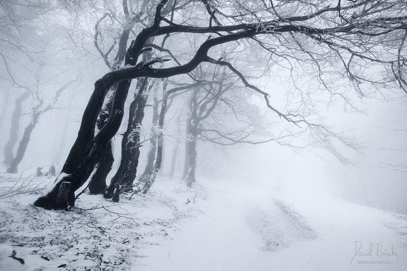 Czech republic, Ore mountains, North Bohemia, Bohemia, Tschechische republik, Erzgebirge, Europe, landscape, mist, fog, winter, winter forest, forest, fine art, foggy, foggy forest, daniel rericha, fairytale forest, mysterious forest,  In the winter forestphoto preview
