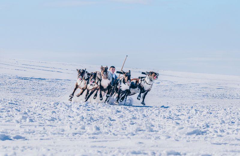 ямал , олени, природа, салехард , гонки, ямал , народы севера, \