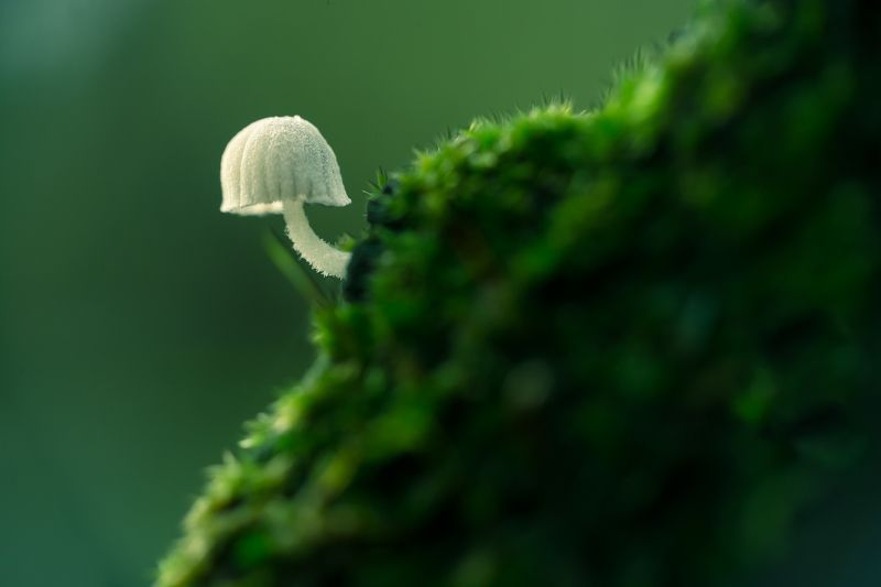 macro, nature, 3mm, fungi, small, white, moss, green, patern, natural The white onephoto preview
