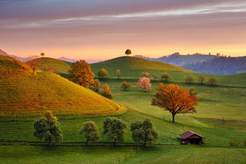 morning, hills, switzerland, spring, trees, beautiful, travel, landscape, europe Fairytale Morningphoto preview