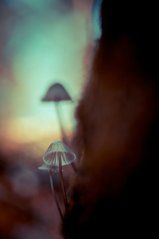 small, fungi, mushroom, art, close up, macro, nature The little onesphoto preview