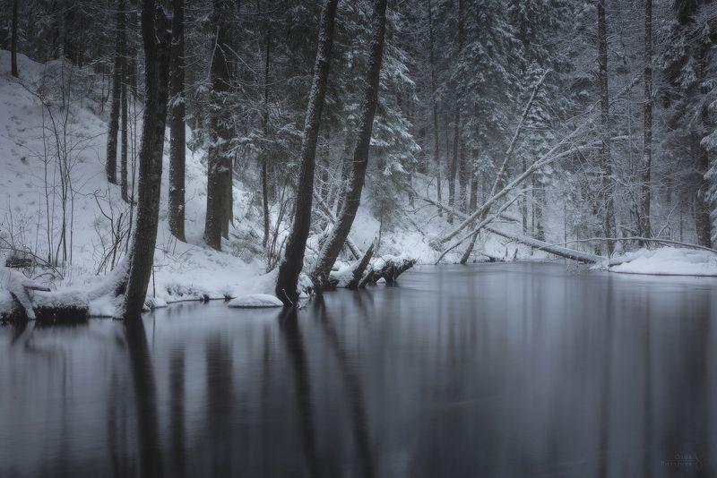 зима, снег, ель, лес, река, мост, комарово, ильичёво Зимние этюдыphoto preview
