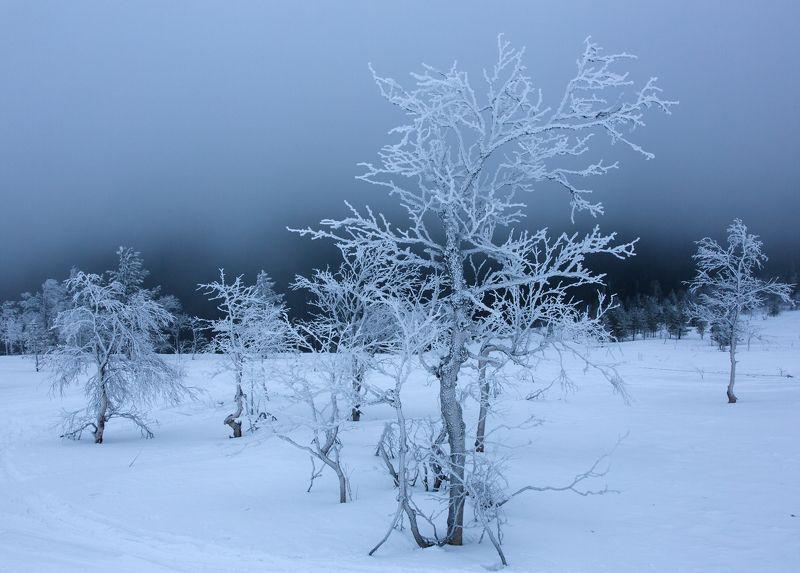 зима, горы, урал, деревья, снег, иней, облака, антон селезнев, путешествие На склоне Главного Уральского хребтаphoto preview