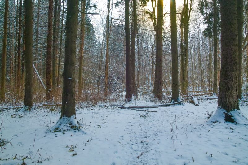 Январь в лесуphoto preview