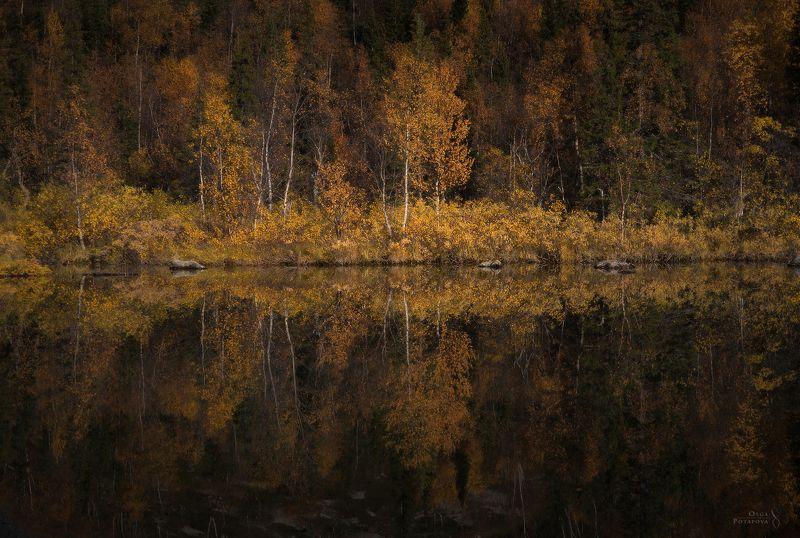 осень, заполярье, север, отражение, тайга, ловозёры, ловозерские тундры, кольский полуостров, сентябрь Заколдованный берегphoto preview