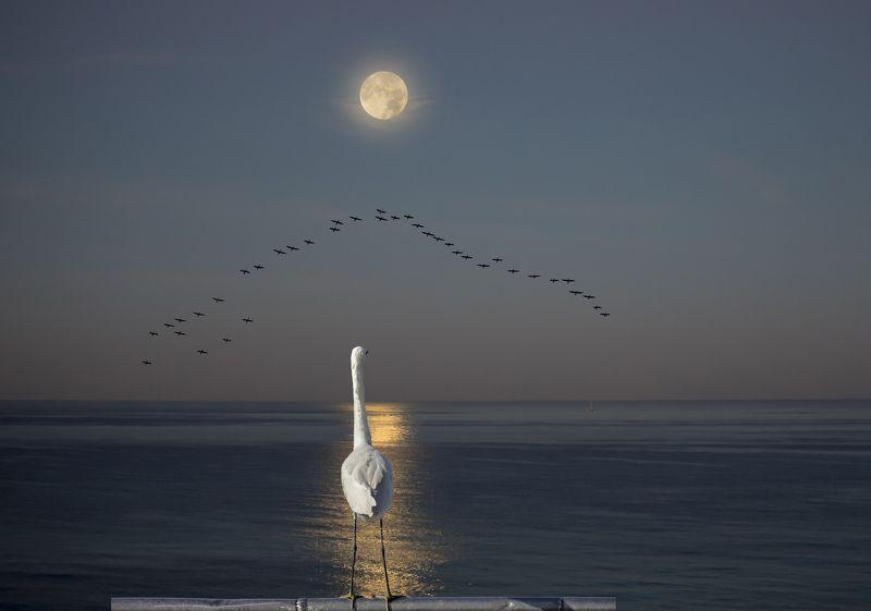 Красивая, уставшая от одиночества птица ищет...))photo preview