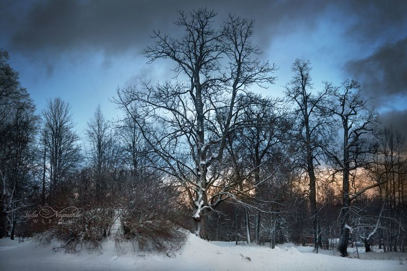 зима, пейзаж, парк, лес, деревья, закат, рассвет Зимний паркphoto preview