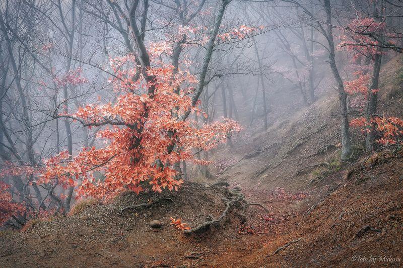 крым,landscape,travel,russia,демерджи, туманый лесphoto preview