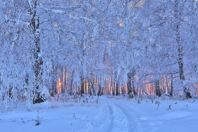 зима, вечер, закат, снег, иней, лес, деревья, дорога Зимняя дорогаphoto preview