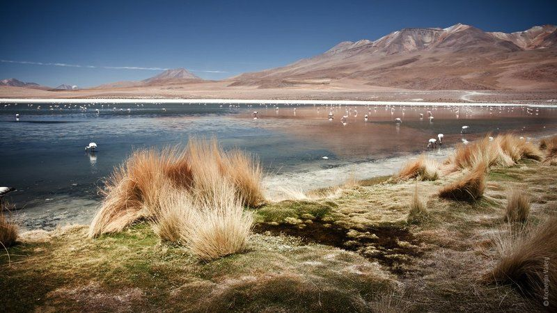 южная америка, латинская америка, горы, фламинго, лама, альпака, озеро, город, закат South America 2photo preview