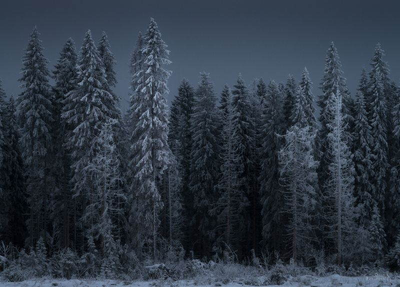 зима, иней, ель, лес, снег, ленинградская область, январь Пришельцы и Стражникиphoto preview