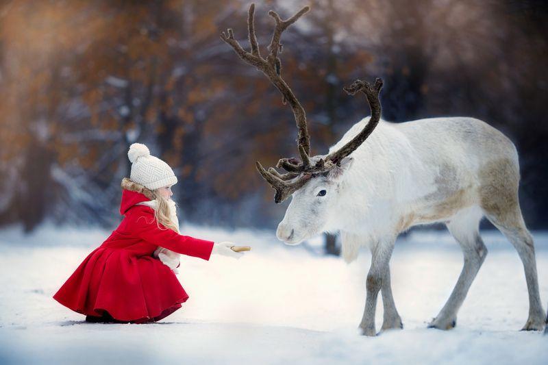 Герда, девочка, северный олень, зима, снег, сказка Угощение.photo preview