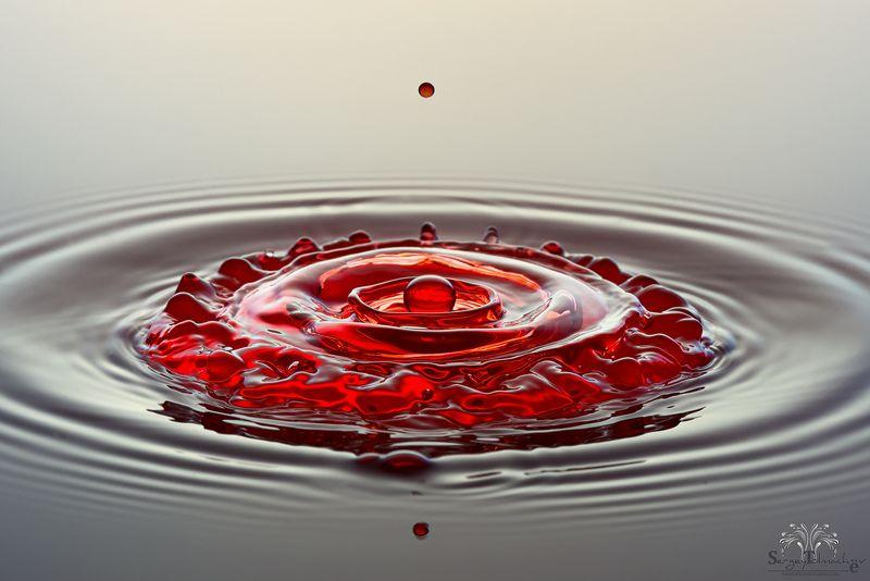 вода, капли, жидкость, макро, С красной каемочкойphoto preview