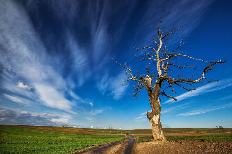 poland, polish, colours, sky, morning, sunrise, sunset, spring, fields, senility, tree, clouds, wind Senilityphoto preview