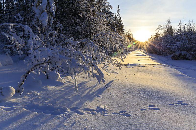 Зимний вечер в лесуphoto preview
