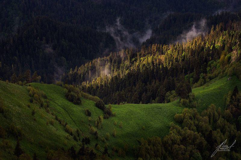 Утро в лесах Большого Тхачаphoto preview