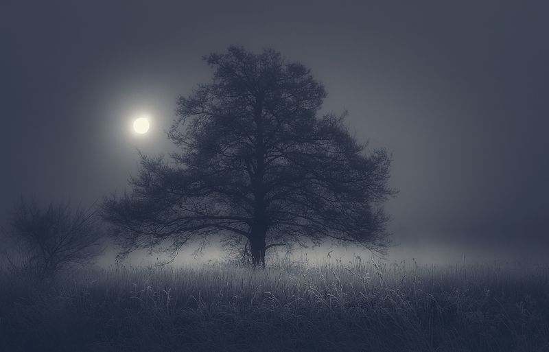 tree,mist,frost,sky,nature,nikon,sun,silence, Silencephoto preview