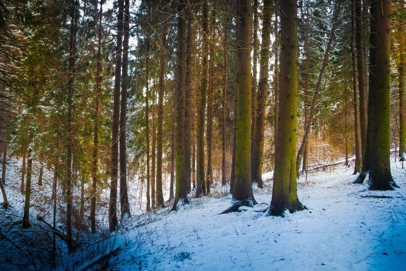 Зимний сон 2photo preview