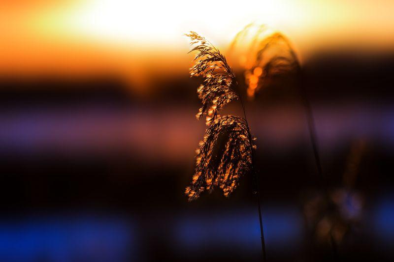 зима, закат, озеро, берег, солнце Миг зимнего закатаphoto preview