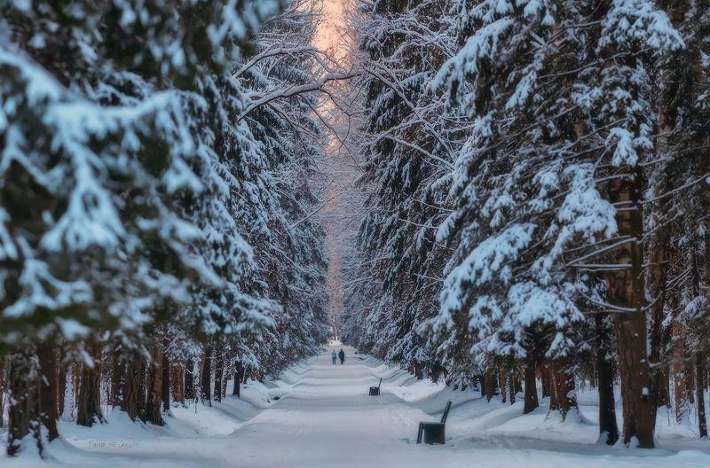 павловск, павловский парк, зима, питер, пейзаж Зимний вечер в Павловскеphoto preview
