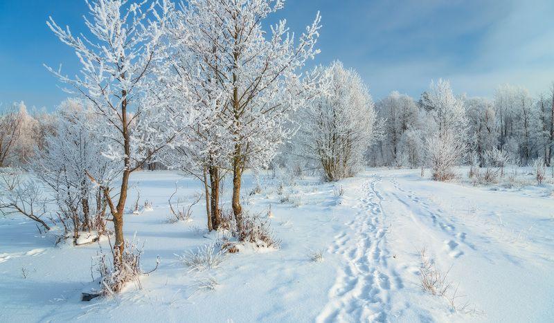 снег, иней, зима photo preview