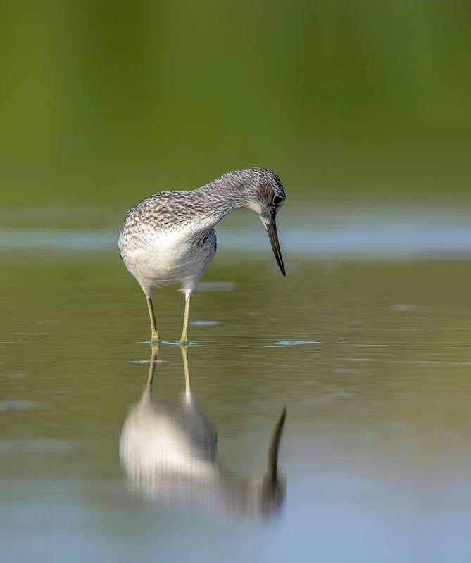 птицы,природа,лето Кокетство.photo preview
