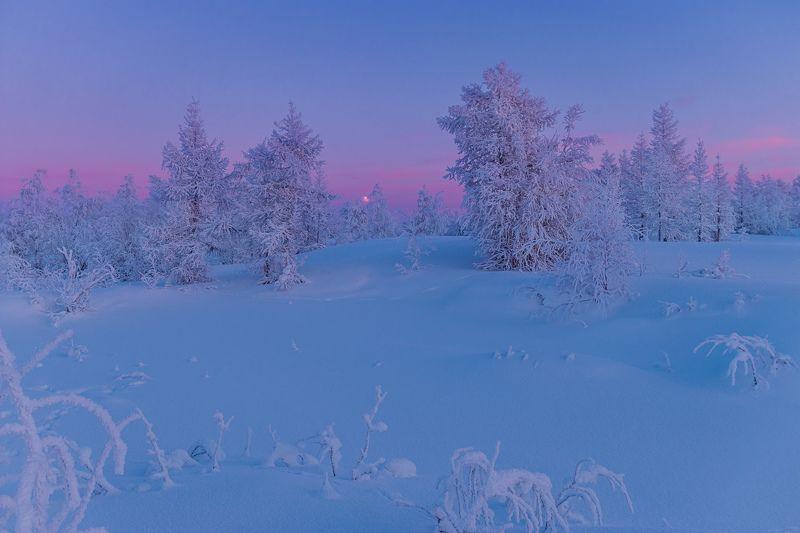 ямал , зима , природа, салехард , январь,  ямал ,север \