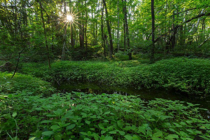 morning, freshness,sun, forest, summer,утро, свежесть, солнце, лес, лето Morning freshnessphoto preview