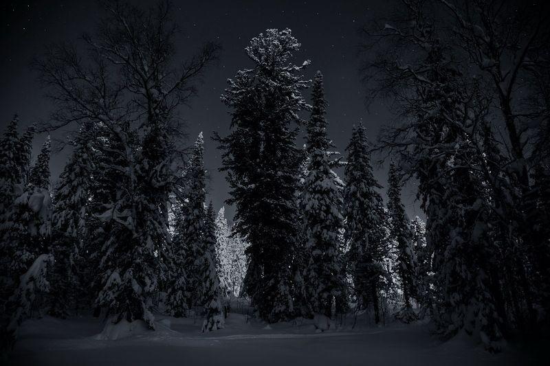 сибирь, зима, снег, кузбасс, природа, пейзаж, лес, Лунная соната...photo preview
