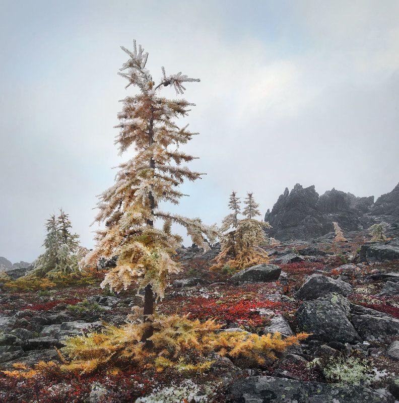 северный урал Осенний променандphoto preview