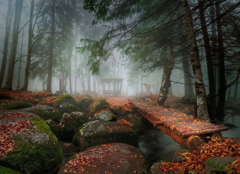 landscape nature autumn foggy scenery forest wood mountain vitosha bulgaria November talephoto preview