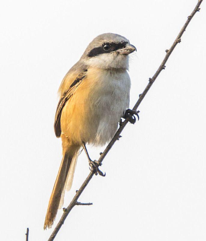 Птицы и белка пальмовая, Индияphoto preview