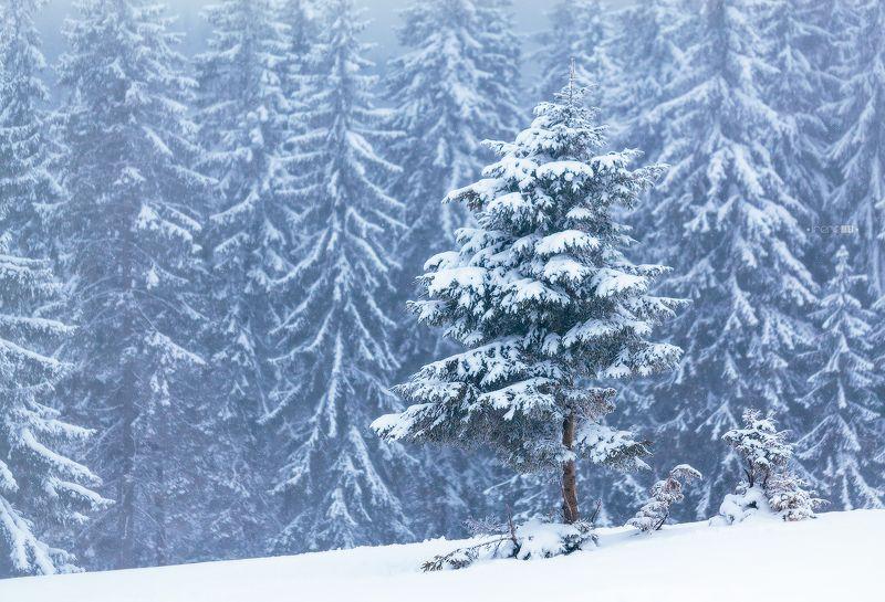 landscape, carpathians, mountains, tree, show, winter, пейзаж, дерево, зима, снег, карпаты, украина Снежные Карпатыphoto preview