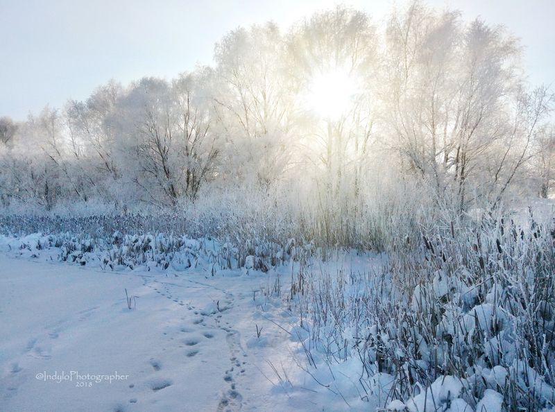 Winter frost.photo preview
