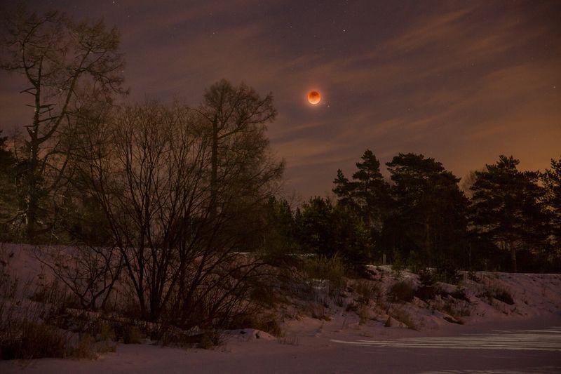 ночь, луна, затмение, звезды, облака, деревья, река, зима, снег, река, антон селезнев Лунное затмениеphoto preview