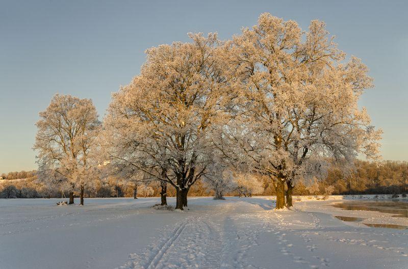 nevant60, березуцкий_александр, природа, красота, пейзаж, путешествия, рассвет Морозное утроphoto preview
