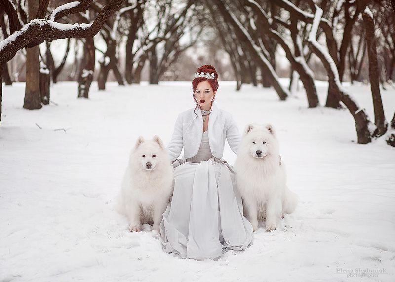 север, собаки, маламут, снежная королева, зима, зимняя сказка, корона, белая королева, бисер, снег, модель, природакрасивая девушка, идеи для фотосессиии зимой Зимаphoto preview