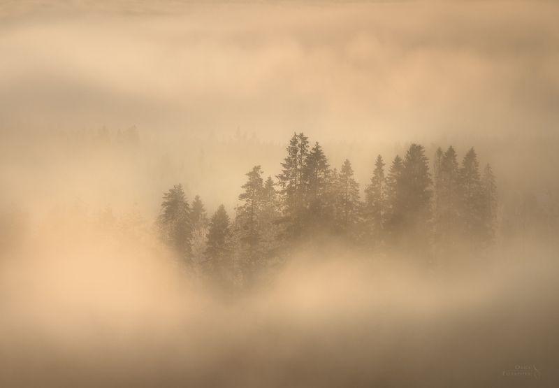 туман, игора, ленинградская область, зима, дымка, деревья, остров, минимализм Зимний туман...photo preview