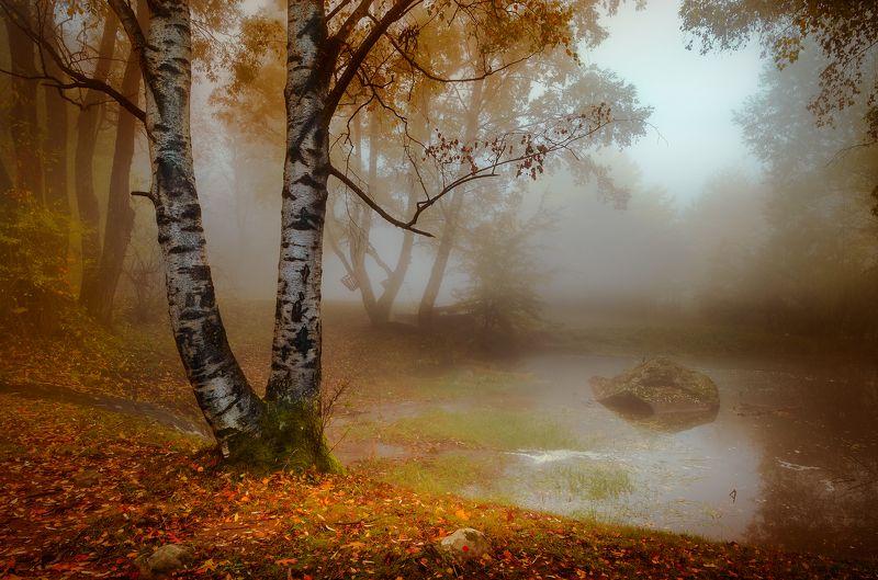 landscape, nature, autumn, foggy, scenery, forest, wood, mountain, vitosha, bulgaria, утро, осень That late autumn morningphoto preview