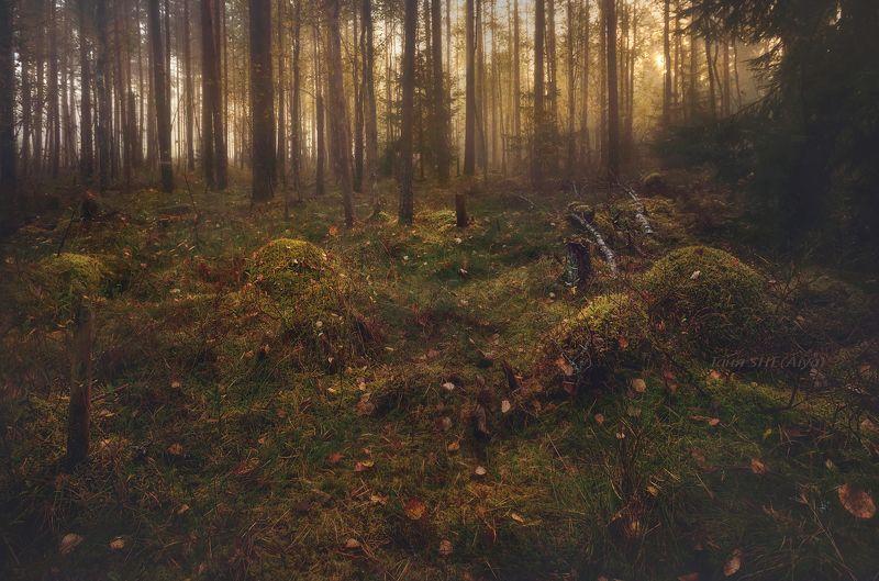 рассвет, пейзаж, утро, лес, landscape, туман Осенним утром...photo preview