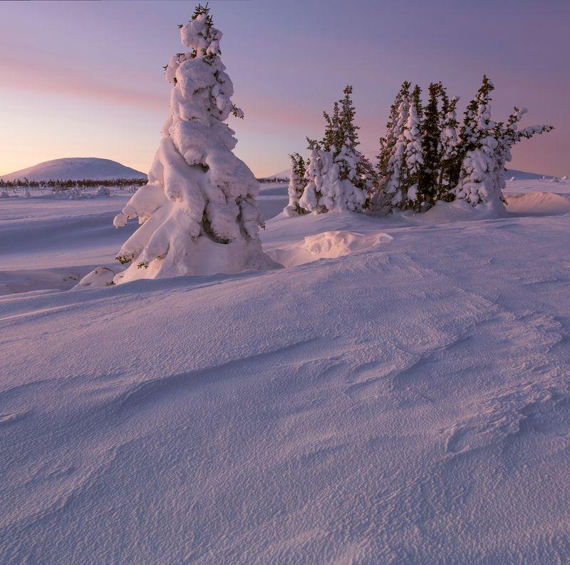 зима, горы, урал, деревья, снег, рассвет, заструги, снежные фигуры, антон селезнев Королева со свитойphoto preview